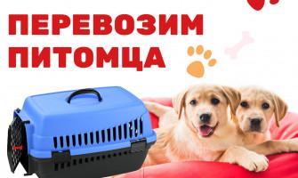 Как перевести домашнего кота на дачу?Пластиковые корзины для животных